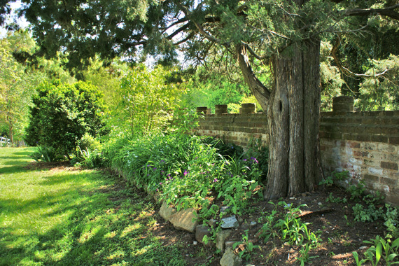 Eastern Red Cedar Next to a Stone Wall | Best Trees to Plant
