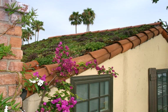 Green roof guides eco friendly roofing options houselogic for Green roof cost per square foot