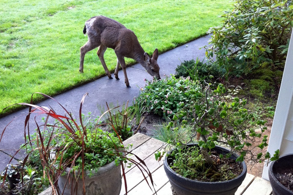 landscaping mistakes curb appeal bushes deer near me landscape design ideas memphis