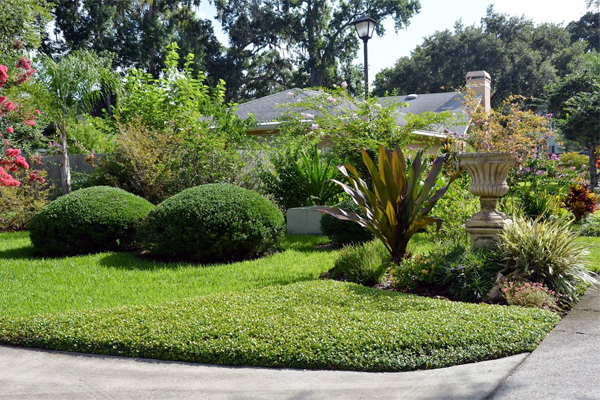 Low maintenance lawn alternatives ground cover for Low maintenance grass plants