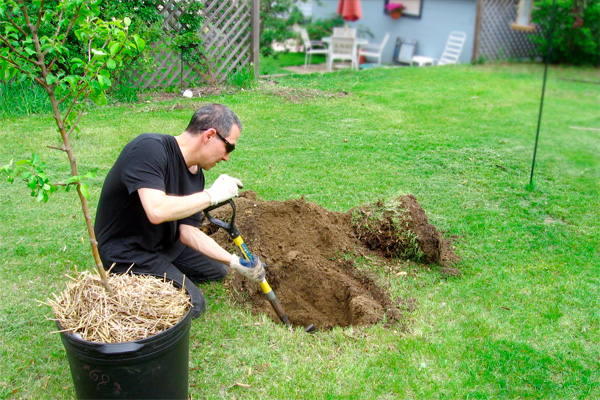 Man digging a hole to plant a tree