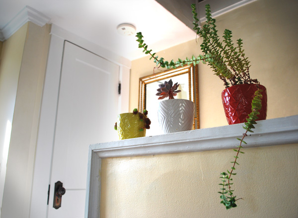 Succulents in a home