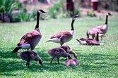 Community Bird Control