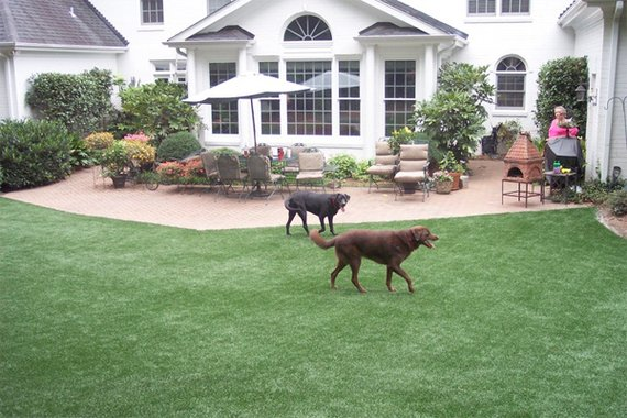 Outdoor Dog Run Ideas for Pinterest
