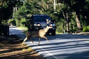 Community Deer Control Neighborhood Deer Control