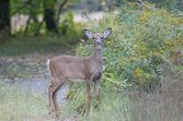 deer-repellent-fishwildlife