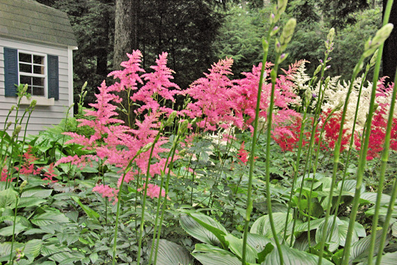 Flowering Plants For Deep Shade