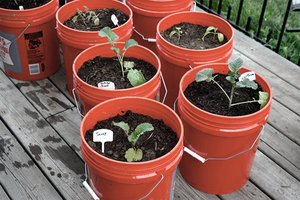 Vegetable container gardening on a deck
