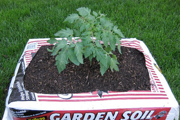 Gardening in a soil bag