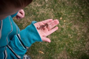 Boy holding a worm in his hand