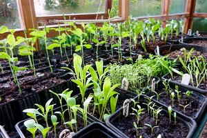 Many seedlings