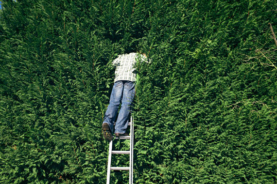 Man in a Large Hedge | Home Office Deductions