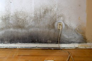 Home Insurance And Mold | Does Home Owner Insurance Cover Mold?300