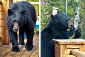 A bear on a homeowner's deck
