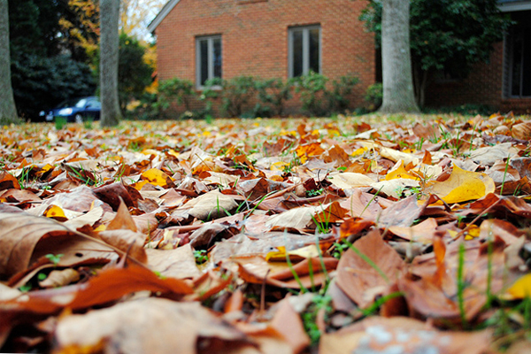Fallen leaves on the lawn of a home