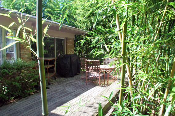 Backyard Deck with Plants | Invasive Bamboo Species