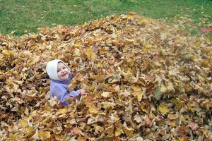 Leaf pile in a family's back yard