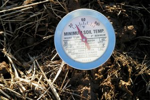 Check soil temperature to see when to apply herbicide