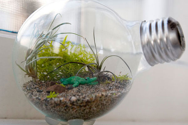A terrarium made from a lightbulb