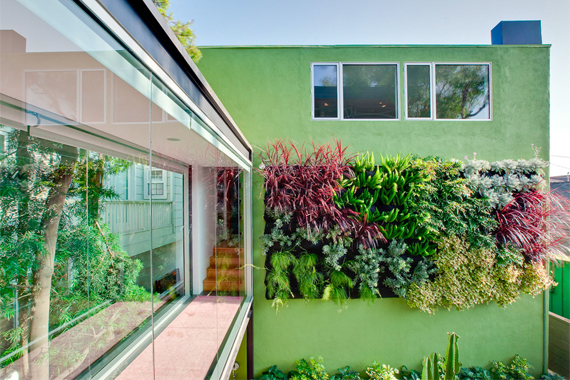 Living Wall | Vertical Gardening Ideas | Home Gardening