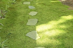 Low Maintenance Ground Cover Ground Cover Alternatives