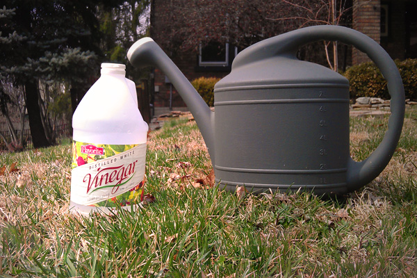 Vinegar is a popular organic weed killer
