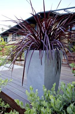 Cordyline Grass in Container | Ornamental Grass Landscaping