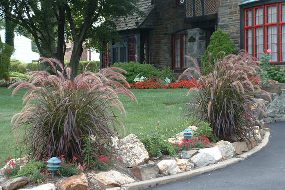 Fountain Grass Along Driveway | Ornamental Grass Landscaping