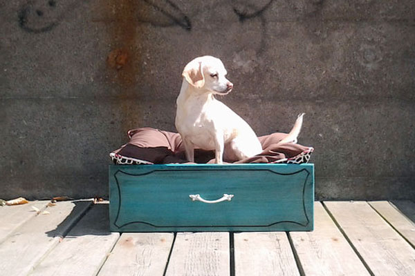 Pet bed made from an old suitcase