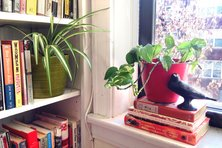 Houseplants on a windowsill and bookshelf