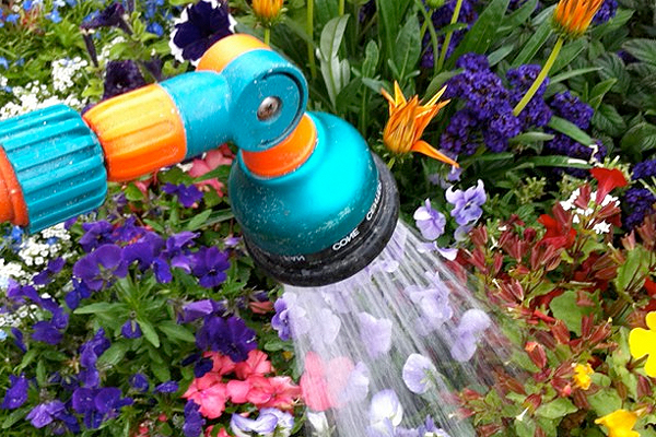 Watering plants with a hose and aerator attachment