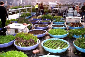 Rooftop community garden by Lando and Associates