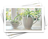 Best Indoor Plants for Cleaning the Air