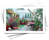 Looking for Container Gardening Ideas?