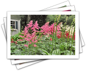 Shady Yard? These Colorful Plants Pack Curb Appeal