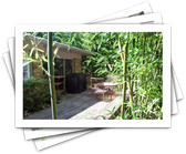 The Plants You Shouldn't Plant in Your Yard, Like Bamboo Spe