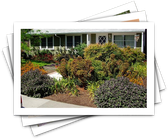 Lawn Replacements and Tips for Landscaping Without Grass