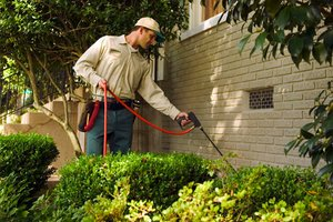Pesticide Options For Home Insect Treatment Costs