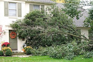 Tree that has fallen into a house