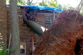 Tree Falls Over Property Line: Who Pays? Who Picks Up the Pieces?