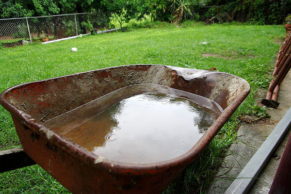 Mosquitoes can breed in water-filled wheelbarrows
