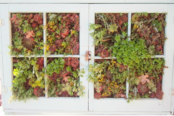 Succulent garden built in an old window frame