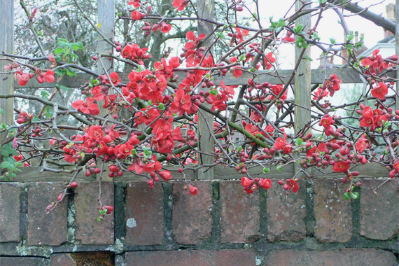 Everything Ws 9 Winter Plants That Dazzle Even In Snow