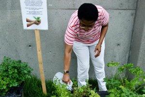 Start Community Garden Community Garden Planning