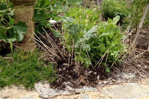Garden Plants Rabbits Eat Pdf