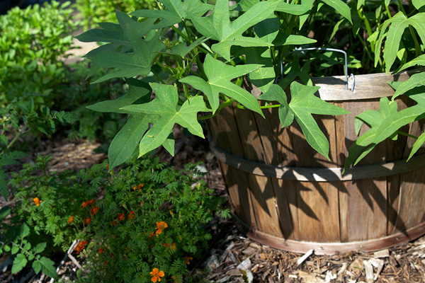Grow Veggies in Your Flower Garden Absolutely